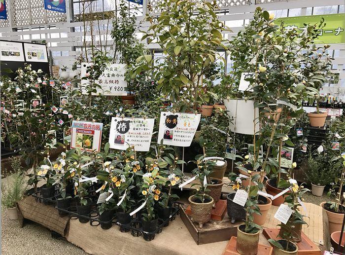 2,8赤塚植物園-1