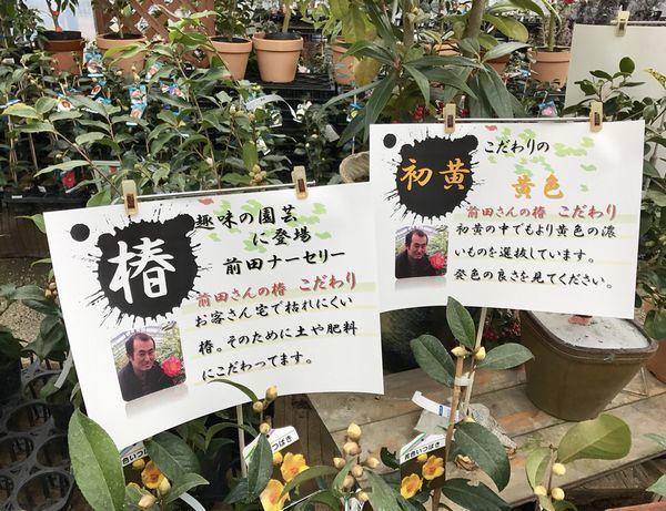 2,8赤塚植物園-17初黄