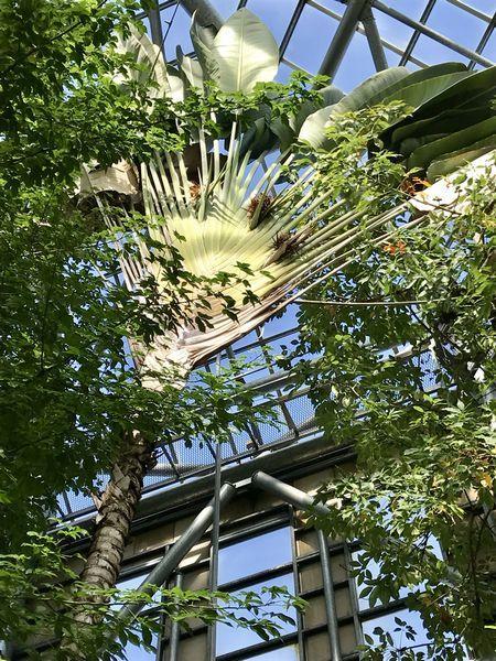 2,8赤塚植物園-13温室旅人の木