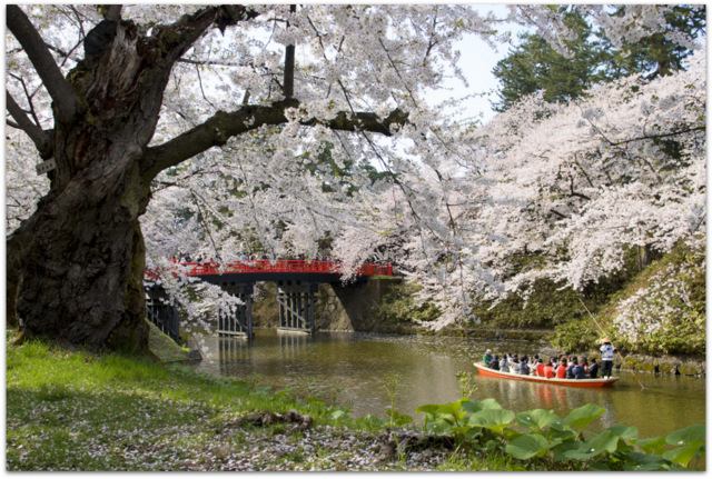 青森県 弘前市 弘前城 弘前公園 弘前さくらまつり 観光 写真 さくら サクラ 桜