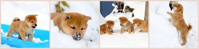 青森県 弘前市 ペット 写真 撮影 出張 犬 猫 自宅 カメラマン 予約