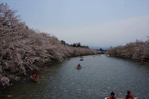 西濠の桜2