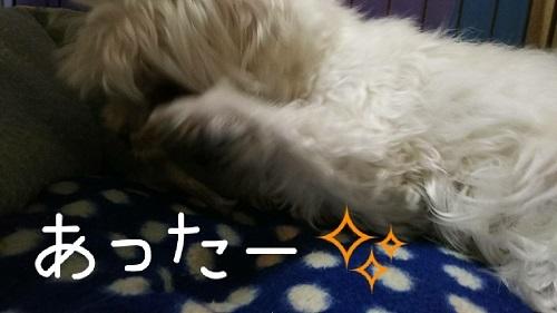 yuki0416 (2)