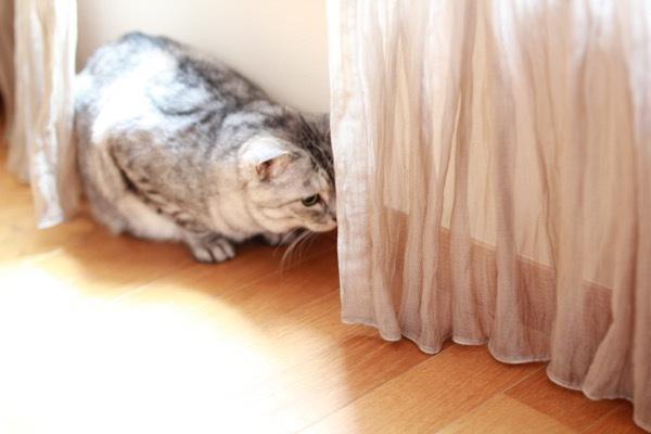 catddas10.jpg