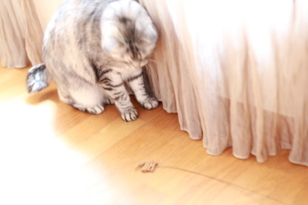 catddas11.jpg