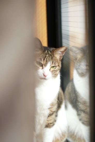 catddas14.jpg