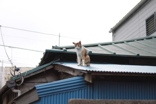 kaitabara8.jpg
