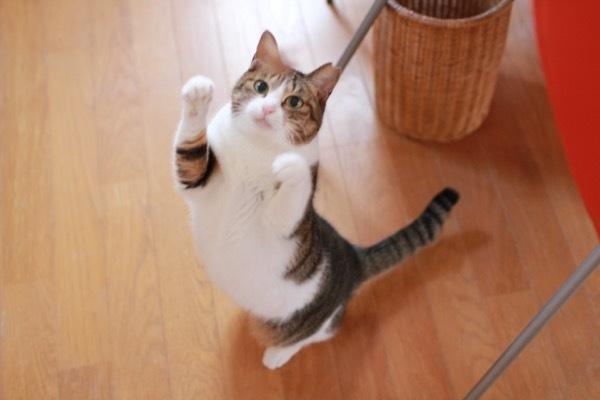 lovefcats2.jpg