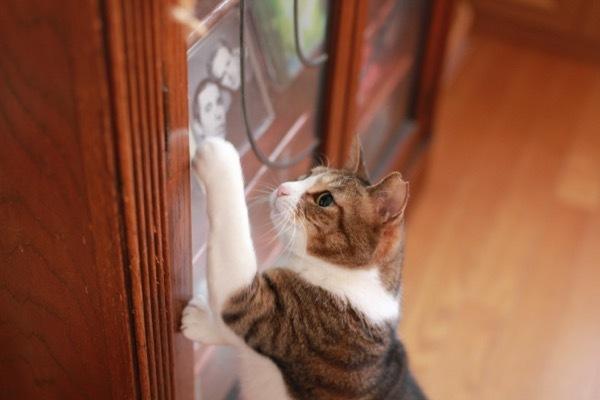 lovefcats9.jpg