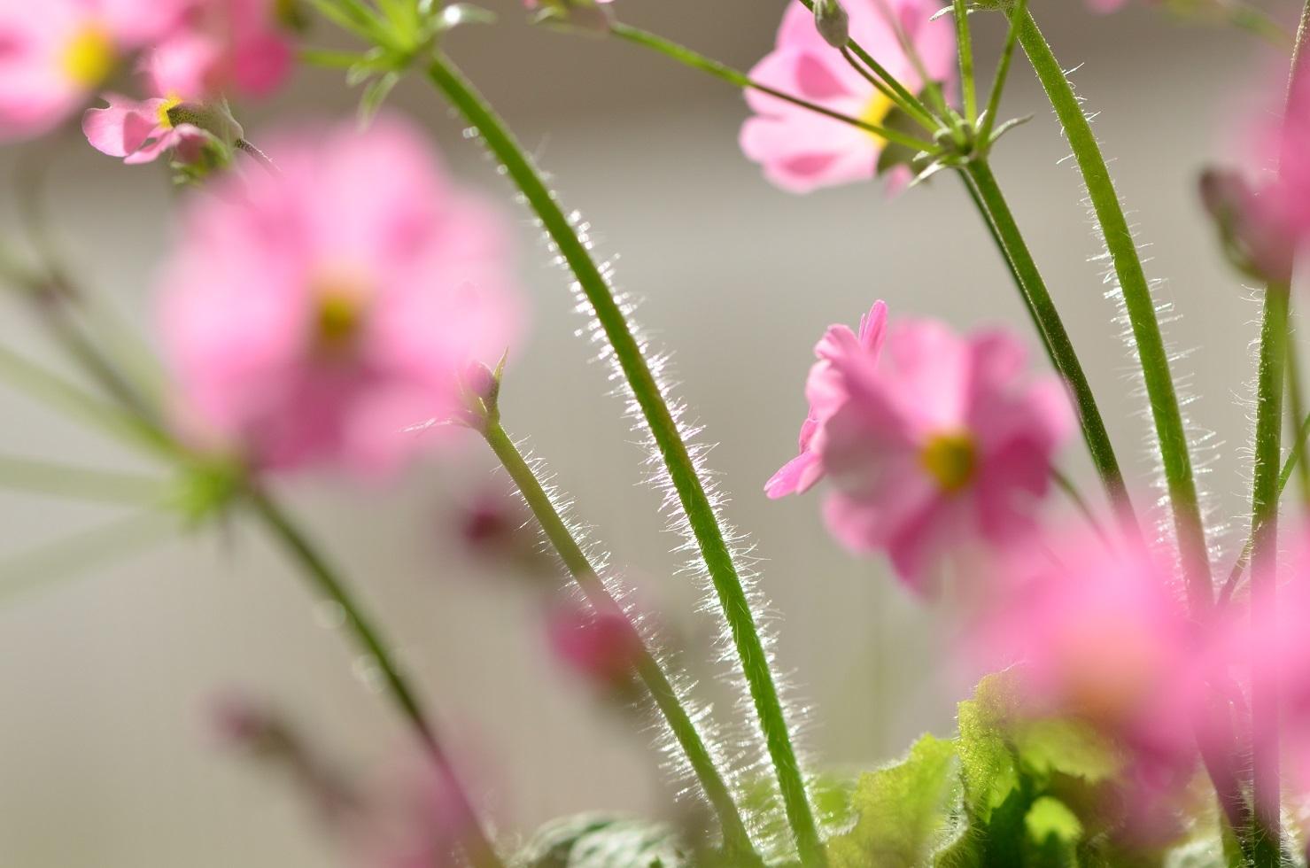 DSC_0003ケバと花