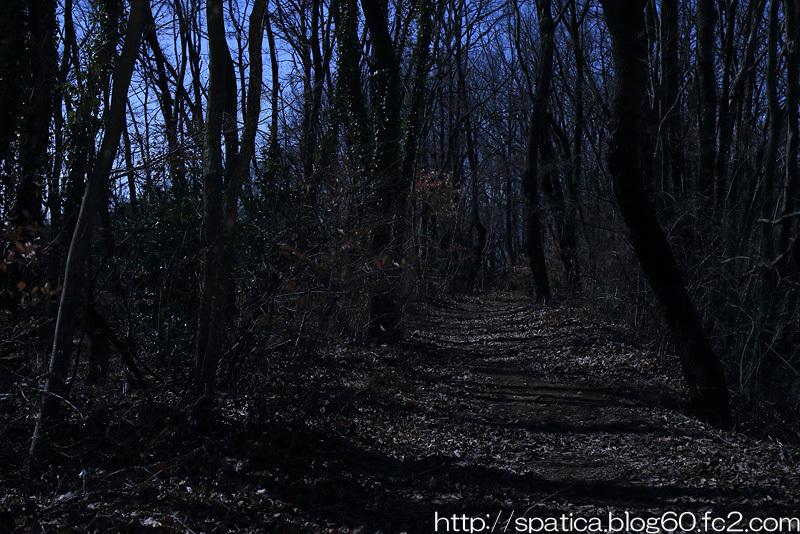 月夜の雑木林