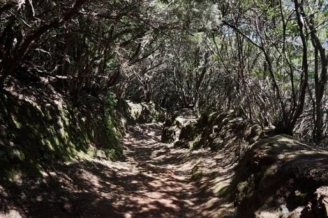 trail-461225_640.jpg