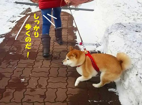 スパルタ散歩