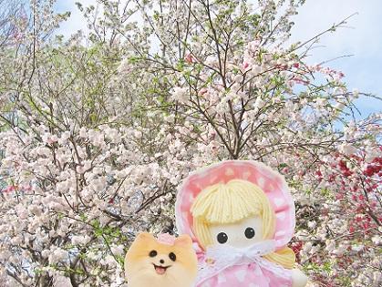 山桃と山桜です