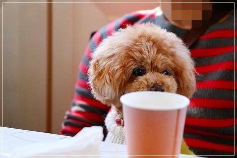 ねねちゃんもコーヒー飲んでますか!?