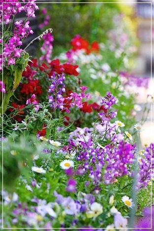 お花満開ですよー♪