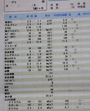 ぐーたん2017年健診血液検査