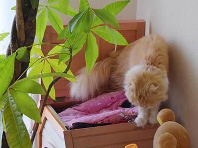 占いミーコ20038