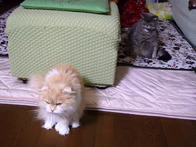 占いミーコ20087