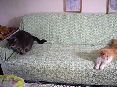 占いミーコ20096