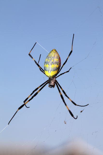 ジョロウグモと クモの糸