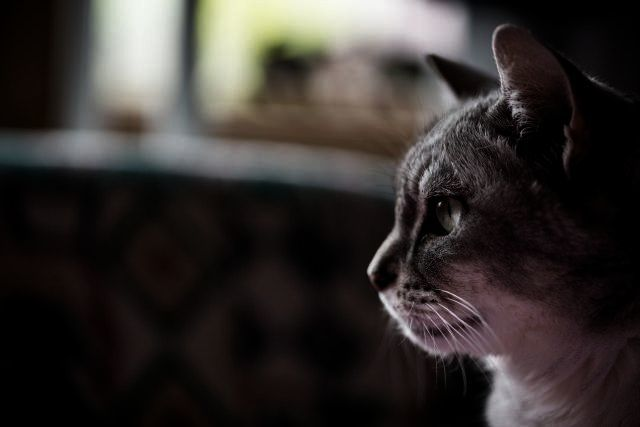 猫 暗やみ