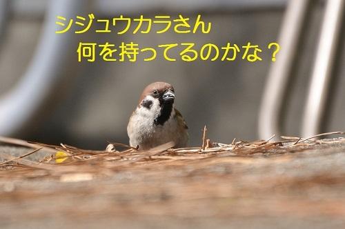 010_20170215184634ff6.jpg