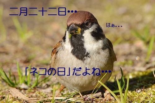 010_201702211836458ed.jpg