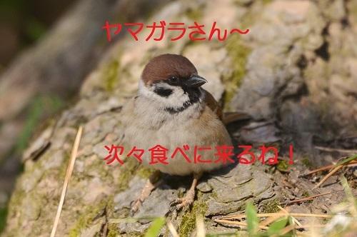 010_2017040119330738f.jpg