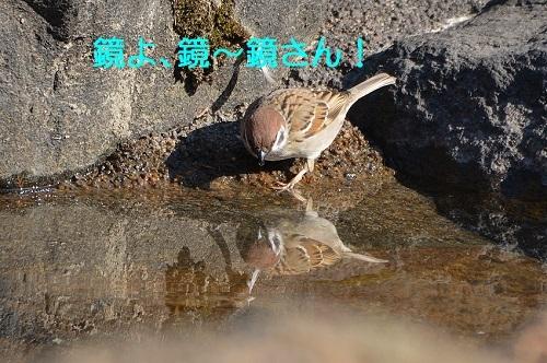 010_20170403195345fae.jpg