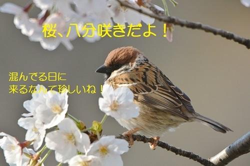 010_20170412190848c54.jpg