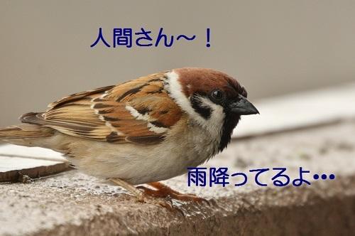 010_201704181919356fa.jpg