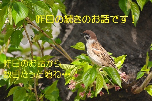 010_2017042119324766c.jpg