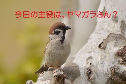 010_20170426012715d20.jpg
