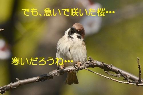 020_2017032219165937a.jpg