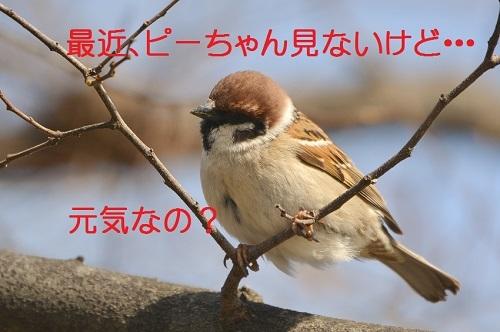 020_201704041921479bf.jpg