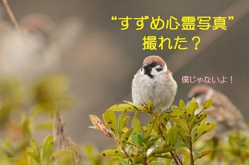 020_20170406190307dc0.jpg