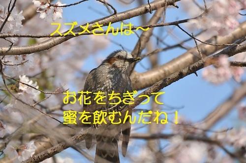 020_20170410183206616.jpg
