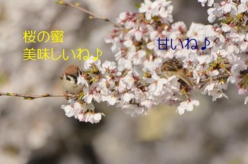 020_20170411192432201.jpg