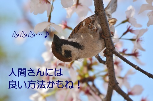 020_20170419212311bdd.jpg