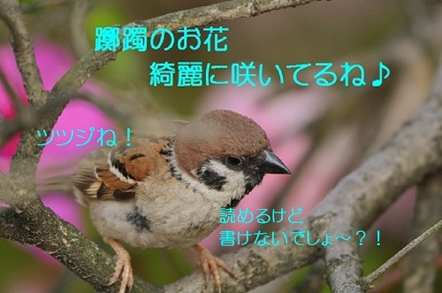 020_2017050722274357e.jpg