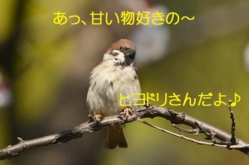 030_20170322191702aa0.jpg