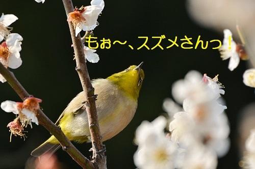 030_20170323180051c38.jpg