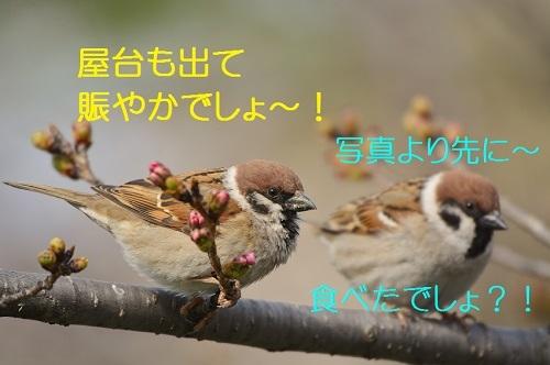 030_20170326193522064.jpg