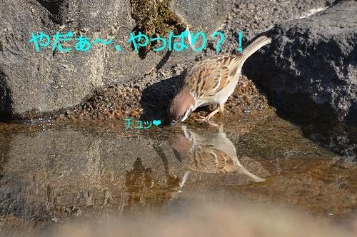 030_20170403195349bca.jpg