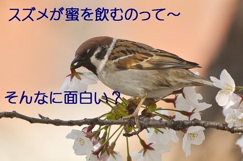 030_20170414183757b6d.jpg
