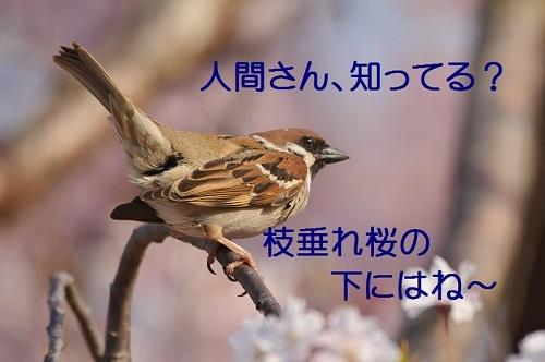030_201704172001176a1.jpg