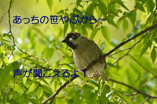 030_20170503214622594.jpg
