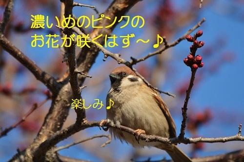 040_20170303185006503.jpg