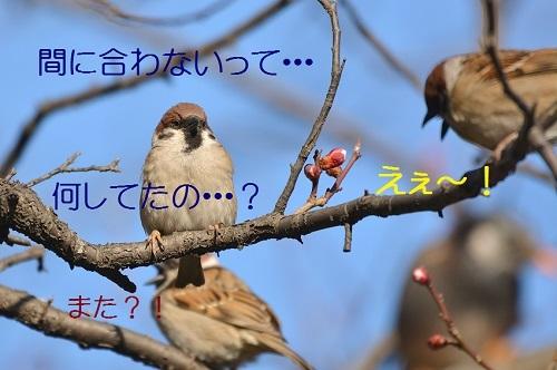 040_20170311223459bcc.jpg